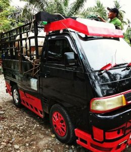 modifikasi body carry pickup